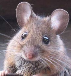 "Papa above! Regard a Mouse O'erpowered by the Cat! Reserve within thy kingdom A ""Mansion"" for the Rat! Snug in seraphic Cupboards To nibble all the day, While unsuspecting Cycles Wheel solemnly away!-- Emily Dickinson"