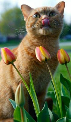 Preyyt kitty and flowers