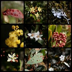 A selection of Flora from Bald Rock Climb - see Biggest Granite Monolith near NSW Australian Wildflowers, Rock Climbing, Wonders Of The World, Blossoms, Granite, Wild Flowers, Flora, Big, Plants
