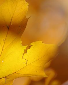 Autumn Nature Photograph - Erin B photo via Etsy #fpoe