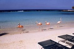 Renaissance Aruba Private Island all-inclusive resort package - the best vacation ever!!