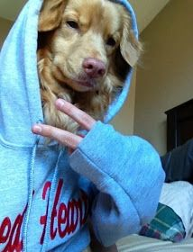 This post contains the Amusing selfie fails that will make you laugh hard. These selfies are funny, hilarious and most of all authentic. Cute Funny Animals, Funny Animal Pictures, Cute Baby Animals, Funny Photos, Funny Dogs, Cute Dogs, Funny Memes, Funny Shit, Funny Laugh