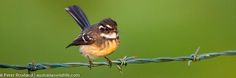 Birds, Animals, Color, Beauty, Animales, Animaux, Colour, Bird, Animal