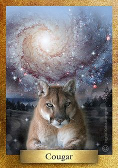 Cougar is also known as Puma. In Zuni Indian myths Cougar is a messenger between higher spirits and animals. To many Native American Cougar carries powerful hunting medicine and is considered one of the six guardians of the true directions. Cougar represents power and knowing when to use it. • This card is one of  48 cards in the Eco Heart Oracle * One of 48 cards in the EcoHeartOracle.com - brief description and not complete oracle meaning.