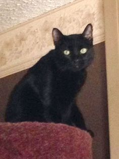 "From Penny Craig... ""This is my handsome boy Jack.""  For the month of October, Cat Faeries is celebrating black cats. We will post pictures of our customer's cuties and donate 1% of our October sales to several black cat rescue groups. You can find out more at www.catfaeries.com/blog/celebrating-black-cats-in-october/"
