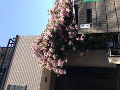 東京辦公室附近之民宅