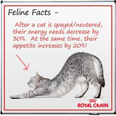 cat facts  cat facts cats cat care
