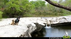 Austin is know for it's pet friendly vibe and that makes it one of our favorite places! Here's our list of the Top Ten Dog Friendly Things To Do in Austin. Find more pet friendly places to stay and things to do in Austin here: http://www.gopetfriendly.com/browse/united-states/texas/austin