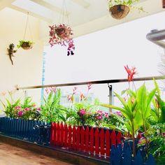 Apartment Balcony Garden, Apartment Balconies, Terrace Garden, Garden Plants, Indoor Plants, House Plants, Saree Designs Party Wear, Indian Garden, Indian Bridal Outfits