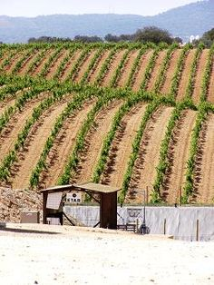 Take the tour the wine region... Visit neighboring vineyards...  Visit Wine a Day » Why Visit The Alentejo?