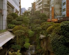 """sixpenceee: """"An urban jungle located in Taipei, Taiwan. Credit to photographer… sixpenceee: """"En urban jungel som ligger i Taipei, Taiwan. Takk til fotograf Andreas Mass. Games Design, Advantages Of Solar Energy, Go Green, Beautiful Places, Around The Worlds, Pictures, Plants, Instagram, Taipei Taiwan"""