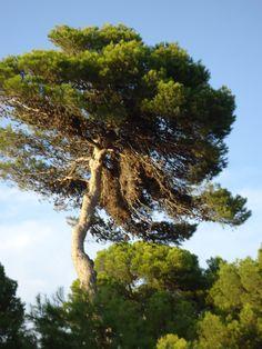Baum mit Papageiennest Foto Veronika Renner