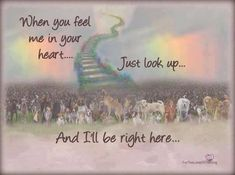 The Rainbow Bridge - words of comfort when a beloved pet crosses over. Description from pinterest.com. I searched for this on bing.com/images