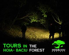Haunted Forest - Hoia Baciu Forest