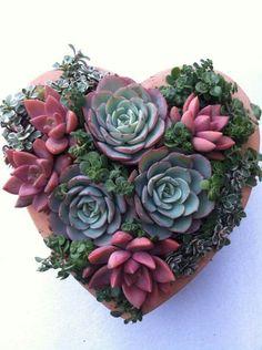 this succulent arrangement Succulent Bowls, Succulent Bouquet, Succulent Gardening, Succulent Arrangements, Succulent Terrarium, Planting Succulents, Planting Flowers, Indoor Gardening, Colorful Succulents