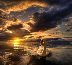 Magic sunset. by Manuel Roger on 500px