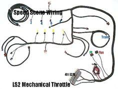 97 04 ls1 w 4l60e standalone wiring harness dbw wiringharness rh pinterest com ECM Wiring Harness GM Fuel Injection Wiring Harness