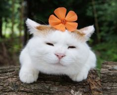 "cybergata: "" ""my mantra is an orange flower."""