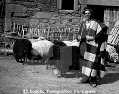 Ovelha Churra Galega Bragançana Espólio Fotográfico Português  1937, Foto Beleza, Bragança, Miranda do Douro