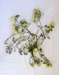 """Branches of quince and oregano stems. To these Louesa added branches of pears, grapes, and grape vines. """"Quince's fragrance is one of my favorites, and it will stay in the house. The leaves will drop, but you can mist them. I wanted this whole bouquet to be edible, which is why I used the oregano and grapes."""""""