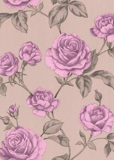 Countess rose wallpaper $150