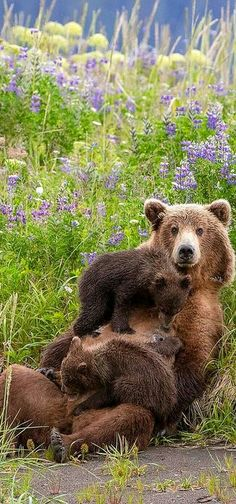 Beautiful Mother and Cubs!