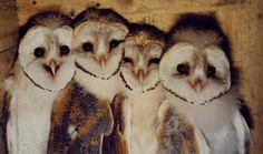 Owl friends.