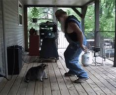 ♥♥♥ Animated: A person with an epic beard dances cutely with a floppy fat raccoon.