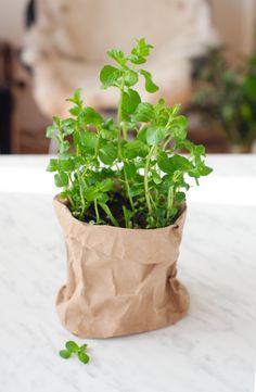 鉢に植え替えて楽しむ観葉植物の苗。そのままの状態で、無地の袋に入れてたのしむ、ナチュラルな楽しみ方。