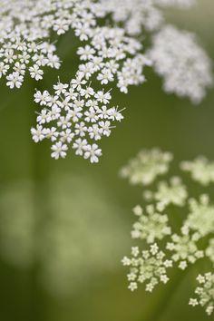 """ponderation: """" Flowers of Fiskars Village by Sari Rantanen """""""