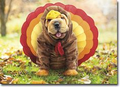 Turkey Dog Funny Shar Pei Thanksgiving Card Greeting Card by Avanti Press | eBay