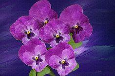 Purple Pansy Blooms: Fine Art Print available on Fine Art America.