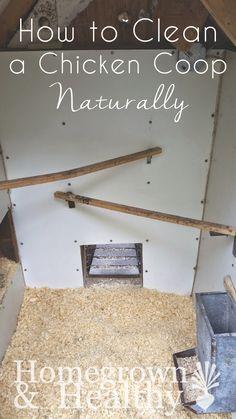 Gjøre rent i hønsehus