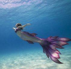Lyrique the Mermaid Photo: See Through Sea Tail: Finfolk Productions Mermaid Man, Siren Mermaid, Mermaid Cove, Mermaid Fairy, Fantasy Mermaids, Real Mermaids, Mermaids And Mermen, Realistic Mermaid, Silicone Mermaid Tails