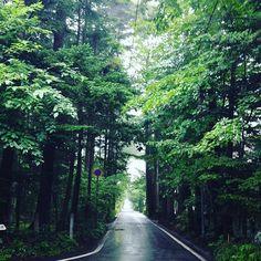 【saramimoka】さんのInstagramの写真をピンしています。《台風 東北地方へ向かっていますね🌪🌀🌪 大きな被害の出ないことを願っています。 収穫間近の果物や野菜の被害が とても悲しいです😢 軽井沢の思い出🌳 軽井沢滞在 4日目は 霧に包まれていました🌫 きっと 雲の中に居たのでしょうね☁️ #軽井沢 #別荘地 #雑木林 #木 #林 #道 #霧 #karuizawa #treestagram #tree #fog #forest #street》
