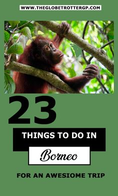 23 of the Best things to do in Borneo - activities in sarawak, sabah, kalimantan and Brunei. Make your borneo backpacking trip awesome!