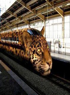 Leopard Train In China Destination: the World