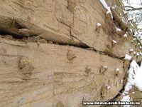 Stěna roubené dřevostavby se zatlučenými kolíky