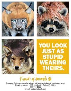 ~don't be a fur hag~