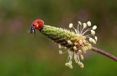 Ladybug Adventures # 7