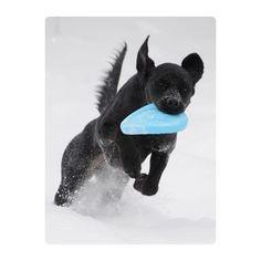 Zisc frisbee jouet non toxique recyclable et recyclé ultra résistant chien  résiste aux molosses  alternative au caoutchouc   lavable en lave-vaisselle  eco-friendly