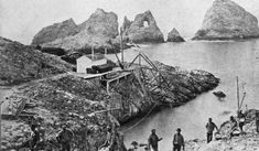 When California Went to War Over Eggs   History   Smithsonian Magazine Alta California, Men's Sailing, Forty Niners, Agriculture Industry, Lighthouse Keeper, Great White Shark, San Francisco Bay, Sonoma County, Sea Birds