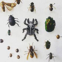 Love my #collection of #bugs. Skull Beetle Pin is un for grabs. Buy or die :) blackbeetle.bigcartel.com  link in bio! by blackbeetlepins