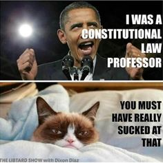 "grumpy cat tardar sauce - Google Search / Actually I think it came out that he wasn't ""actually a law professor""; he was a, ""guest lecturer,"" which had the same status."