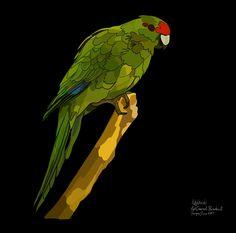 Kakariki (Red Crowned Parakeet) on Photo Block Photo Blocks, Parakeet, Photo Reference, Birds, Crown, Website, Digital, Red, Prints