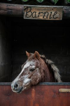 Horse /   Barnie (by Chris Bloom)