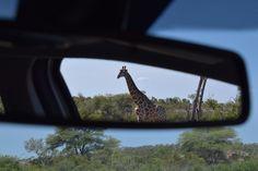 huurauto zuid afrika Krugerpark