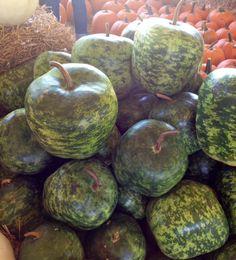 Heirloom+Large+Apple+Gourd+Lagenaria+siceraria+-+8+Seeds