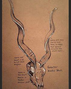 #seenunseenbook #kudu #greaterkudu #africa #zoology #africananimal #art #sciart #illustration #animal #wildlifeart #sketch #animalart #sketchbook #drawing #nature #artwork #scienceart #womeninart #ebook #illustratedbook