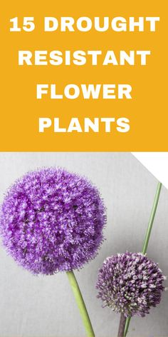 Flower Plants, Flowers Perennials, Garden Plants, Planting Flowers, Flower Beds, House Plants, Window Box Plants, Weed Killer Homemade, Achillea Millefolium
